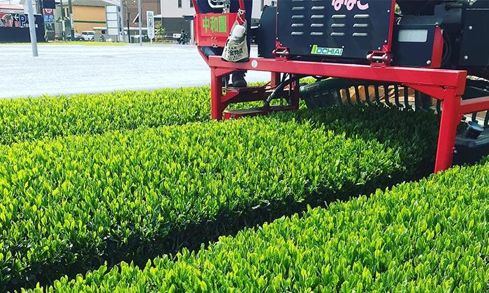 2021年4月24日より狭山茶の新茶製造始めました。
